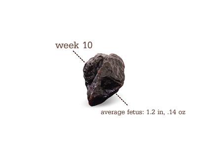 Week 10 Pregnancy Update- Prune |
